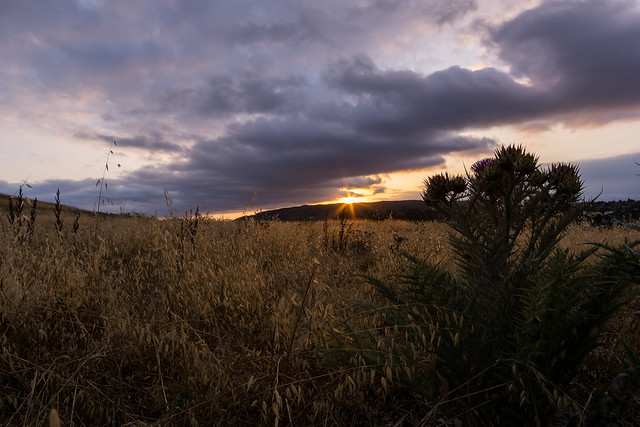 Day 137: Poway Country Sunset