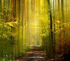 Forest, Poland