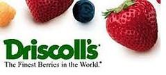 Driscoll logo