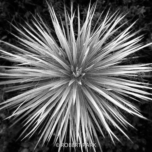 """""""Silver Star,"""" By Robert Park  http://www.robert-park.com by Robert Park Photography"""