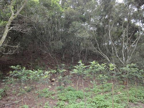 在森林中造林,生態學會提供