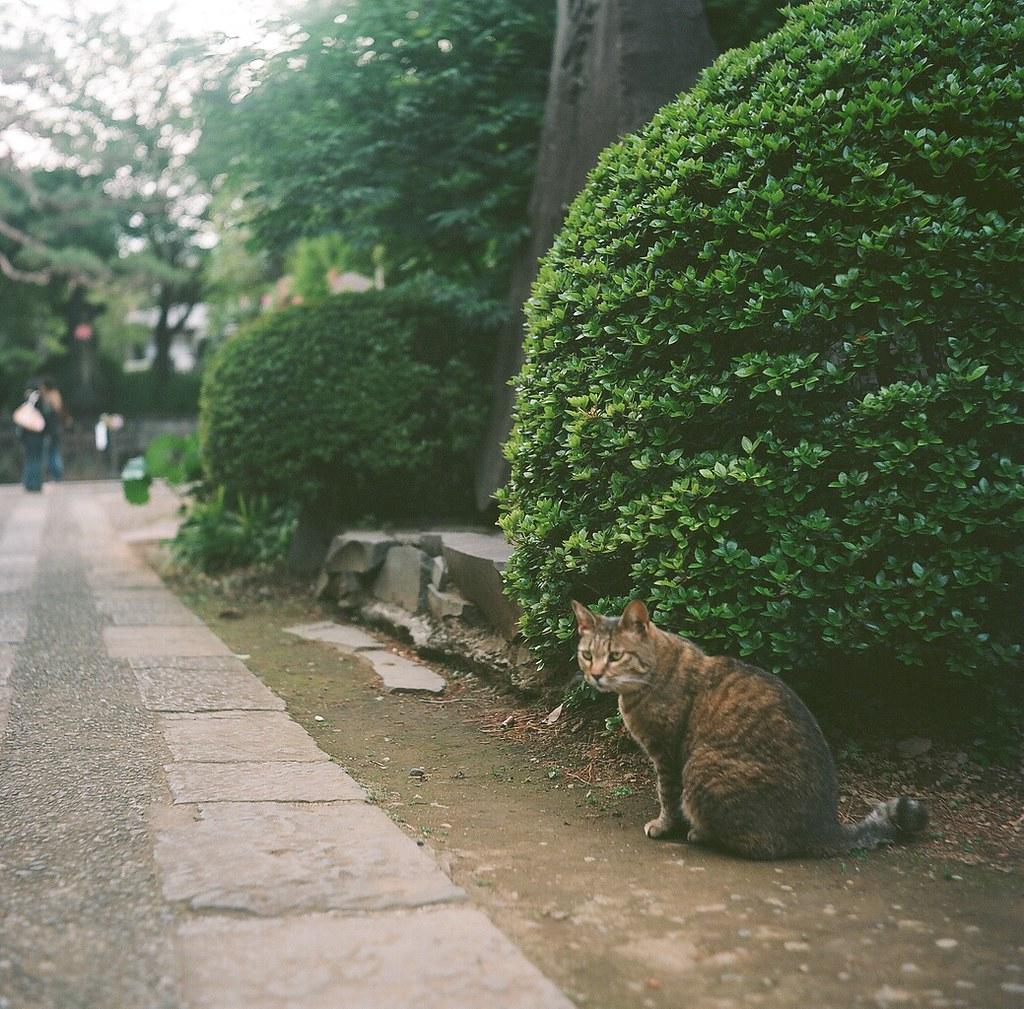 足立区の猫達