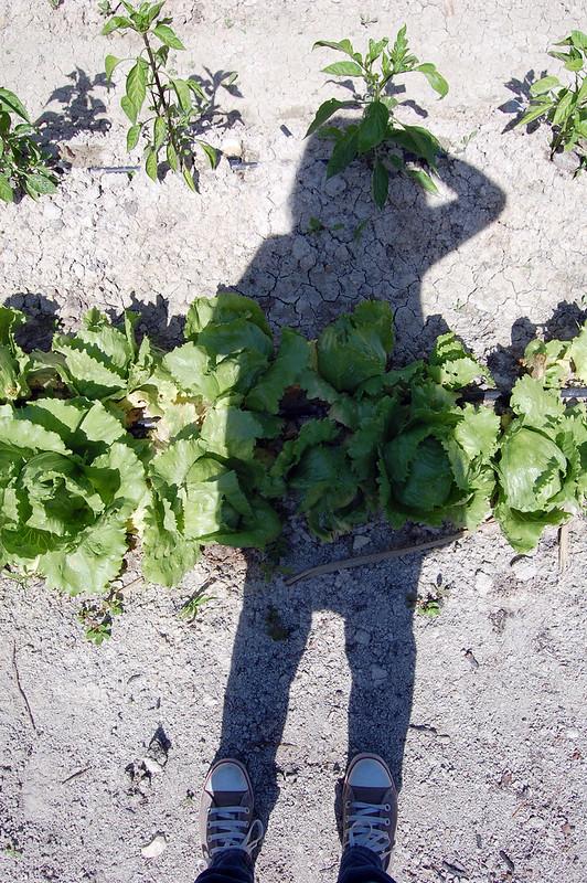 sombra sobre el huerto