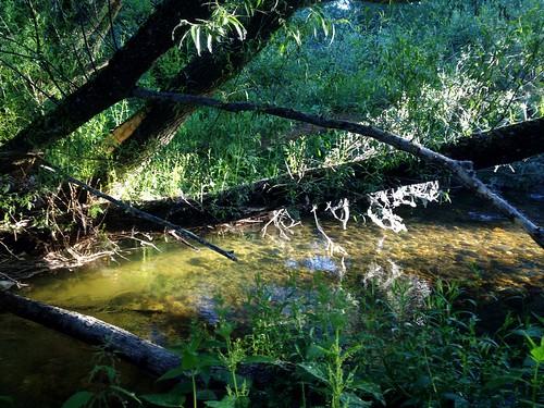 Río Lozoya by eRdAvE
