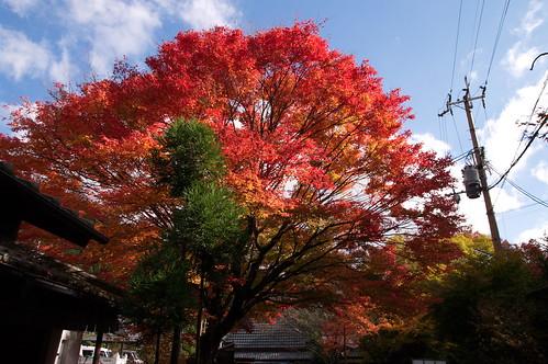 【写真】2012 紅葉 : 寂光院/2020-08-29/IMGP6330