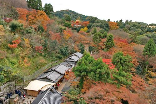 【写真】紅葉 : 清水寺