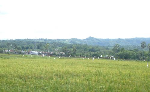 Makassar-Bira-Minivan (83)