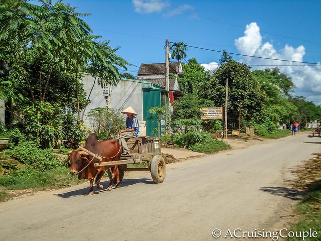 Ox Cart Vietnam