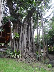 The Best Tree