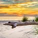 Driftwood sunset, St. Joseph Peninsula State Park, Florida
