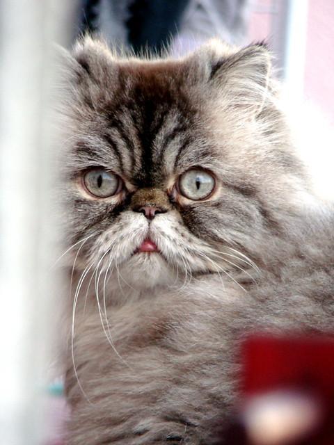 cica a szomszéd párkányról