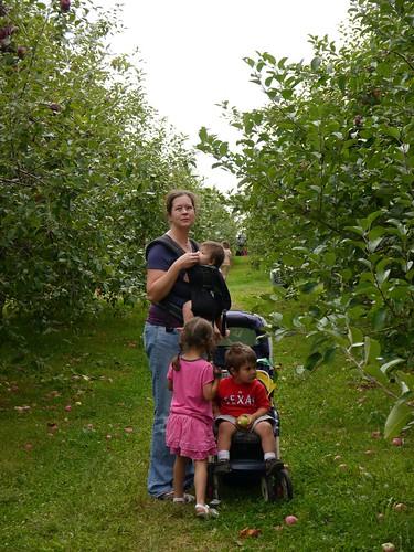 Apple picking at Big Apple Farm, Wrentham
