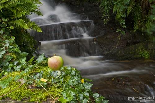 eve adam apple waterfall chute pomme adamandeve chutedeau aveyron adameteve françoisfabié durenque moulinderoupeyrac