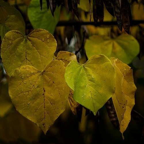 Fade to Fall