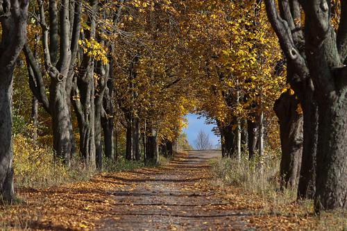autumn light shadow color green field leaves canon germany deutschland thüringen herbst thuringia blätter bunt ef70200mmf4lisusm canoneos5dmarkii