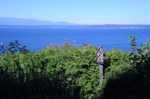2 story Birdhouse, sailboats, sunny day, bushes, Pacific Ocean, Olympic Mountains, Seattle, Washington, USA by Wonderlane