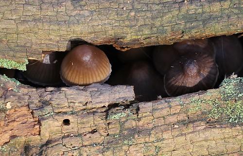 Fungi  (13n) (12)