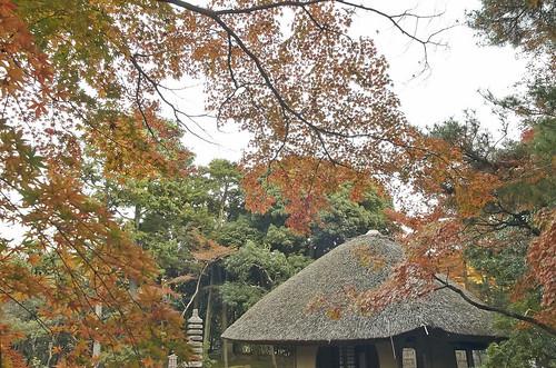【写真】2013 紅葉 : 白沙村荘/2020-12-28/IMGP3699