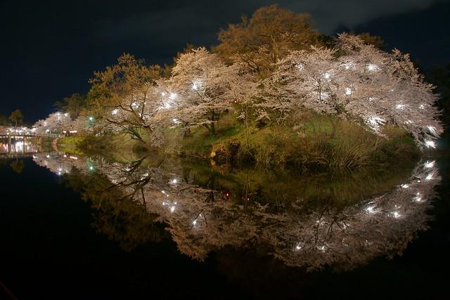 写真_「桜シップ」