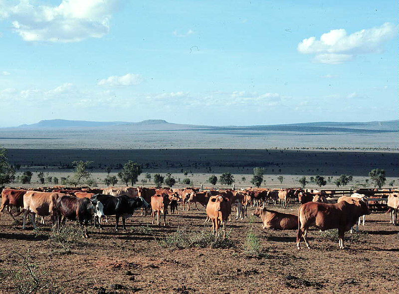 Kenya rangelands