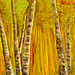 ASPEN.. IN ALCOHOL INK by Louise001