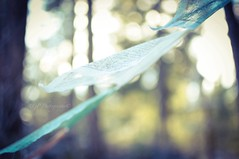 | faded prayer flags |