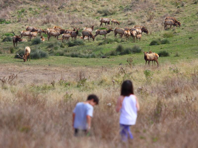 IMG_1190 Kids Watching Tule Elk