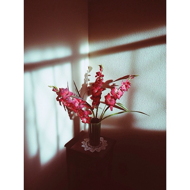 This corner at my inlaw's house is a favorite of mine in the morning. #moveitmoveit #morninglight #mortalmuses #mobilemonday #shuttersisters #ourcollective
