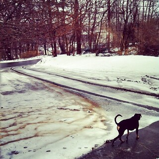 Happy Spring - Lola #dogstagram #dobermanmix #winterwontend #dobiemix #ilovemydogs #snow #mud