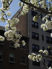 NYC Blossoms