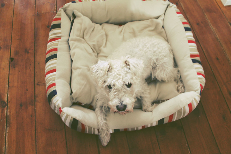 Bodhi dog bed