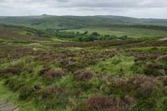 The Roaches to Back Forest (307)