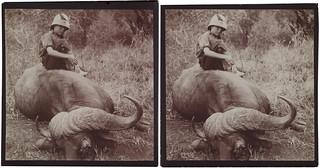 Jorma Gallen-Kallela sitting on a dead African buffalo on a safari in Tana, 1910.