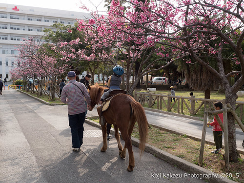 与儀公園 | Naha City, Okinawa 05
