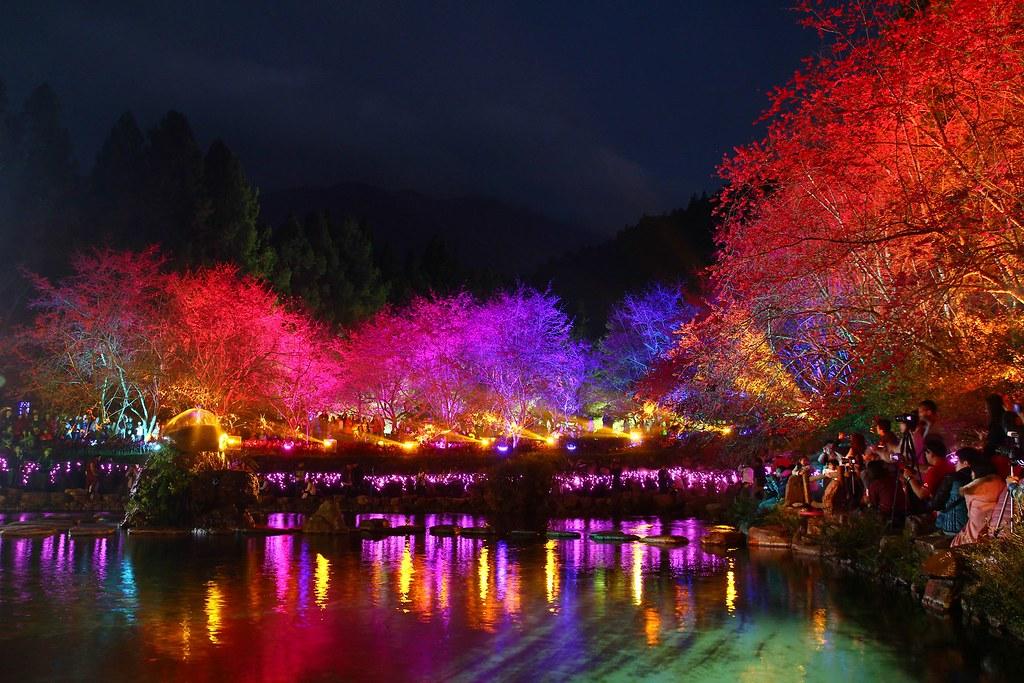 九族櫻花祭 (119)
