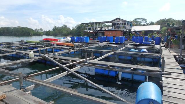 Pulau Ubin fish farm