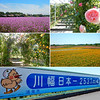 Photo:【埼玉県 花 聖地】 ディー・ノイシ_Walkerplus By noishi_d