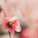 Pink by lisastein92