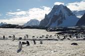 Expeditions-Trekking Antarktische Halbinsel. Pinguine vor dem Mount Scott, 882 m. Foto: Günther Härter.