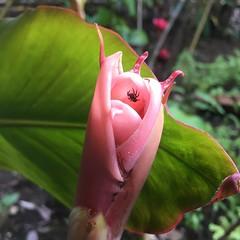 Arañita en flor