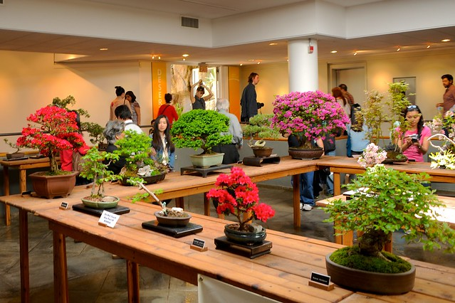 A collection by Friends of Bonsai on display in the Steinhardt Conservatory. Photo by Mike Ratliff.