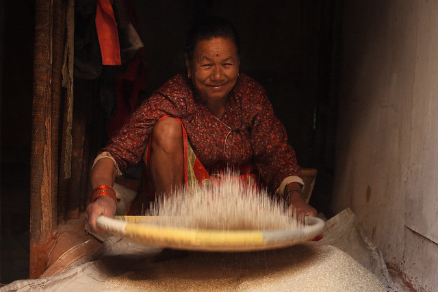 Nepalese woman sifts rice.