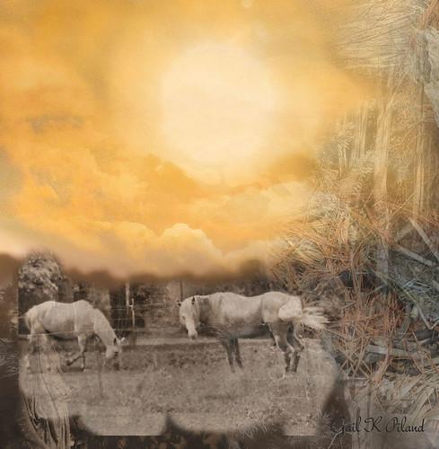 sky horses sun texture photoshop landscape hypothetical autofocus thegalaxy flickraward theperfectphotographer sharingart gailpiland ringexcellence flickrstruereflection1