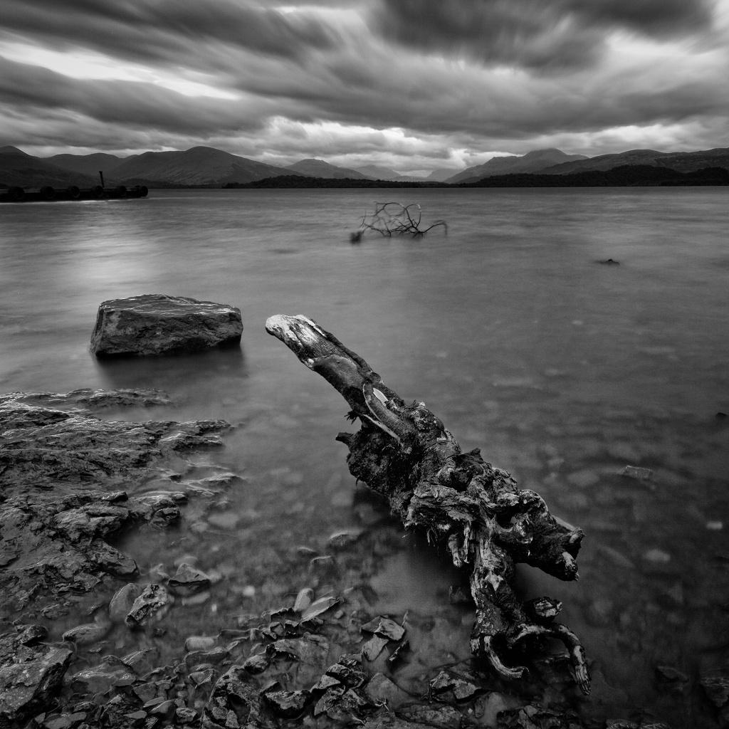 Driftwood, Loch Lomond #1