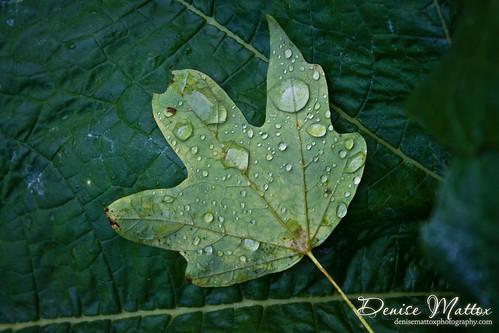 Leaf on leaf