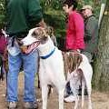 9-23-06 Greyhound Planet Day