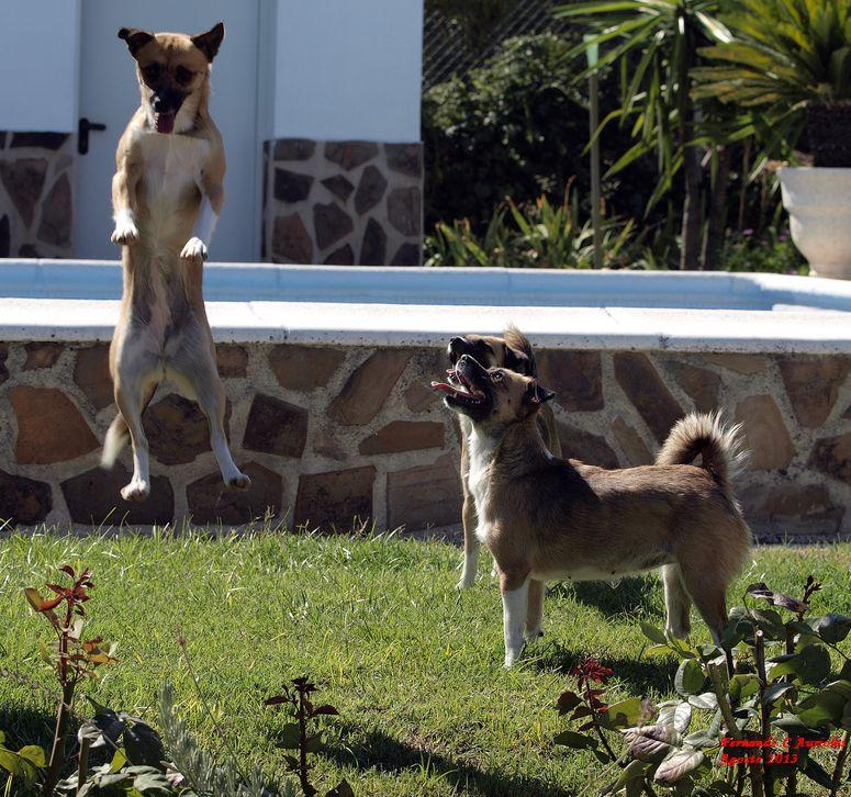 Look how jump!