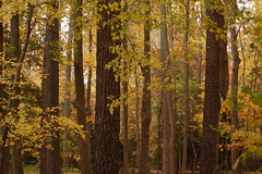 Fall Forest 9318