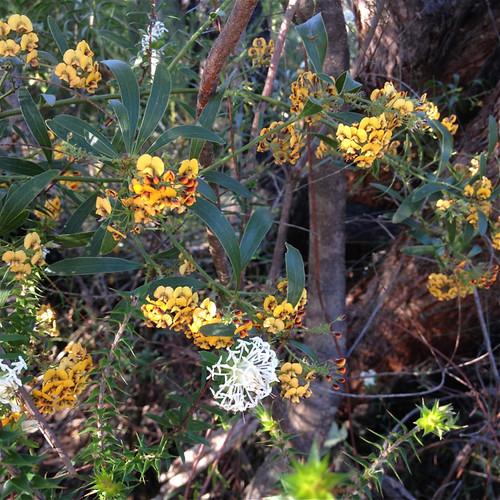 bush flowers 3