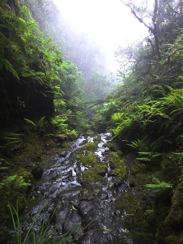 A stream in TNC's Waikamoi Preserve. This is the water of our watershed and one of the reasons to preserve the area.
